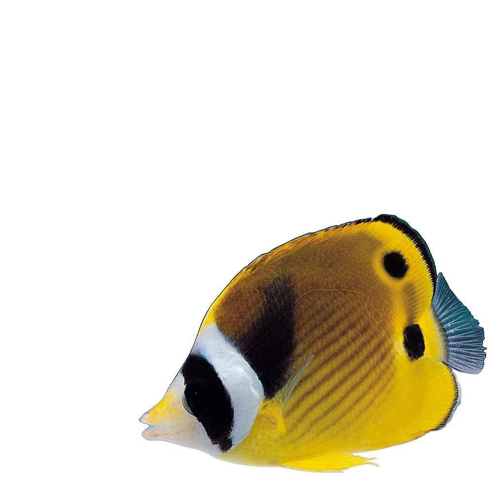 PRENKIN 6pcs//Set Suaves Mar Anguila se/ñuelos 80mm//2.3g Falso Cebo de Pesca Paddle Tail lanz/ón Artificiales Se/ñuelos