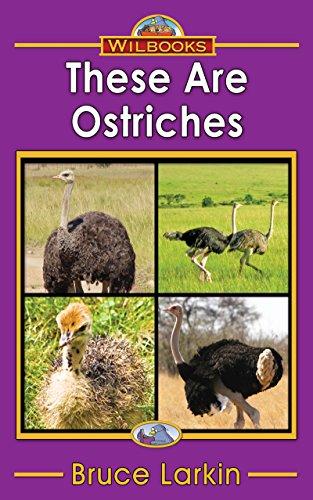 Desert animals kindle edition by bruce larkin children kindle desert animals by larkin bruce fandeluxe Images