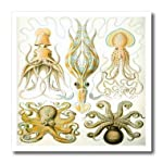 3dRose HT_80725_1 Picture of 1800 Drawing of Famous Biologist Squids-Iron on Heat Transfer for Material, 8 by 8-Inch, White