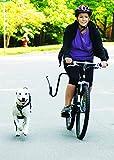 Springer Dog Exerciser, Biking with Your Dog