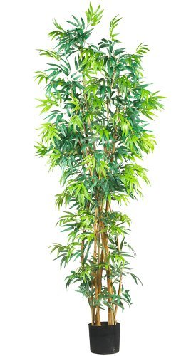 Tall Bamboo Plants - 6