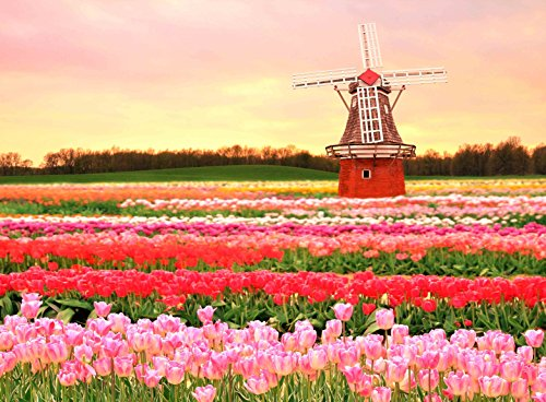 Adult Jigsaw Puzzle Amsterdam Tulips Field Traditional Dutch Windmill 500-Pieces