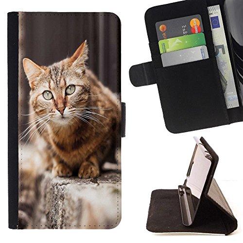 STPlus Gato en una caja Animal Monedero Carcasa Funda para Samsung Galaxy J3 Emerge / Galaxy J3 Prime / Galaxy J3 Eclipse / Galaxy J3 Mission #1
