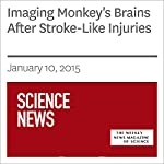 Imaging Monkey's Brains After Stroke-Like Injuries | Ashley Yeager