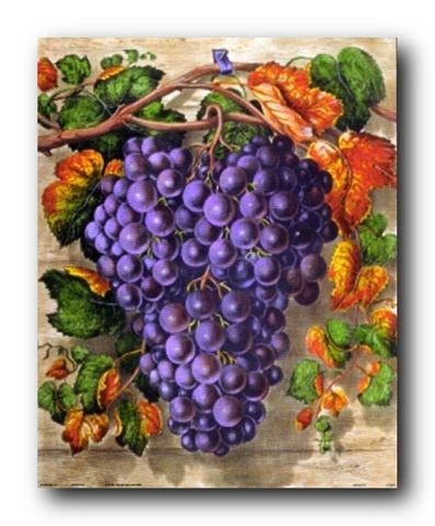 Black Grape Still Life Fruit Kitchen Wall Decor Art Print Poster