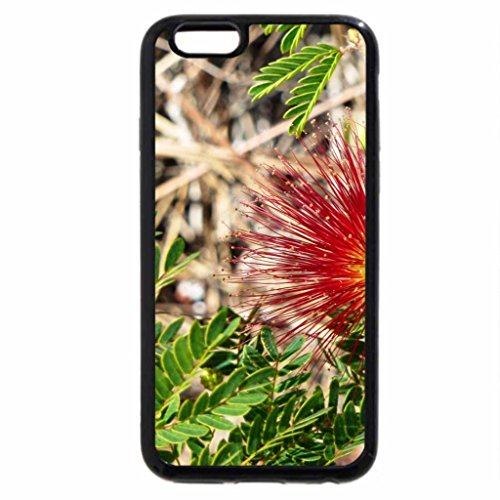 iPhone 6S / iPhone 6 Case (Black) Red powderpuff flower