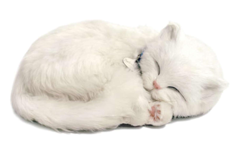 Perfect Petzzz 4934 - Gattino di peluche, colore: Bianco