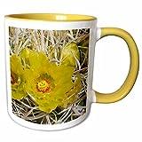 3dRose VWPics Flowers - Pair of Barrel Cactus flowers.(Ferocactus acanthodes).Anza-Borrego Desert State Park, California.. - 11oz Two-Tone Yellow Mug (mug_45932_8)