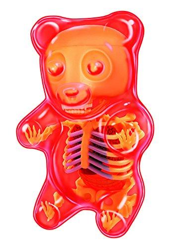 3d anatomy models - 3