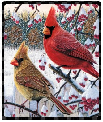 Funny winter cardinal Birds 50