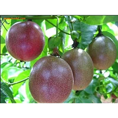 SD0530 Passion Fruit Seeds, Fresh High Germinating Seeds, Rare Seeds, Non-Genetically Modified Seeds (15 Seeds) : Garden & Outdoor