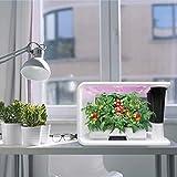 PerfectPrime aspara Nature - AS1001WH Smart IoT
