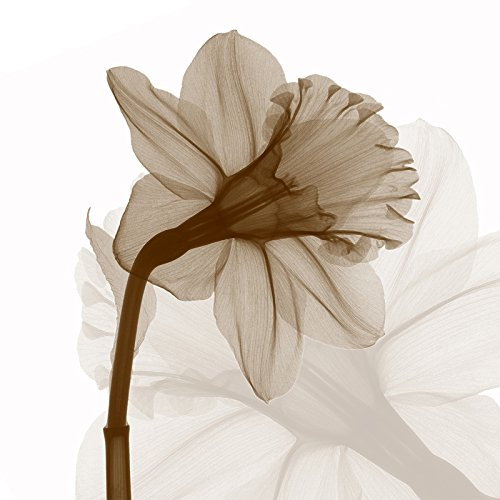 Wieco Art Large Contemporary Stretched and Framed Floral Giclee Canvas Prints Brown Flickering Flowers Pictures Paintings on Canvas Wall Art Work for Bedroom Kitchen Home Decorations, 24 by 24-Inch