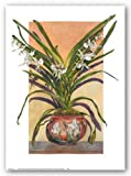 Arts and Crafts Orchids, Angraecum Supur - Poster by Sally Robertson (15 x 20)