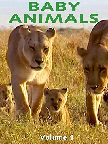Kids on Fire Prime Video Spotlight: Animal Babies