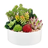 Greatflower Artificial Succulents arrangement with white ceramic pot,Pot Diameter:6inch