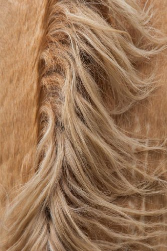 A Blond Mane by Neal L. Parisi