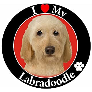 """""""I Love My Yellow Labradoodle"""" Car Magnet With Realistic Looking Yellow Labradoodle Photograph In The Center Covered In UV Gloss For Weather and Fading Protection Circle Shaped Magnet Measures 5.25 Inches Diameter"""