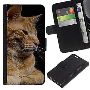 Orange American Curl Shorthair House Cat - la tarjeta de Crédito Slots PU Funda de cuero Monedero caso cubierta de piel Apple (5.5 inches!!!) iPhone 6+ Plus / 6S+ Plus