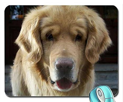 Animales Animales Fotografía Cámara de fotos de perros caras Bored 3072 x 2304 Wallpaper mouse pad computer mousepad: Amazon.es: Oficina y papelería