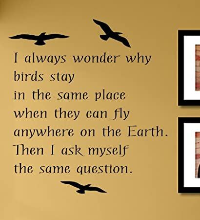 Amazon.com: I always wonder why birds stay in the same place ...