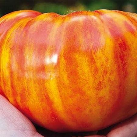 Tomato Vegetable seeds Mikado Pink from Ukraine Large