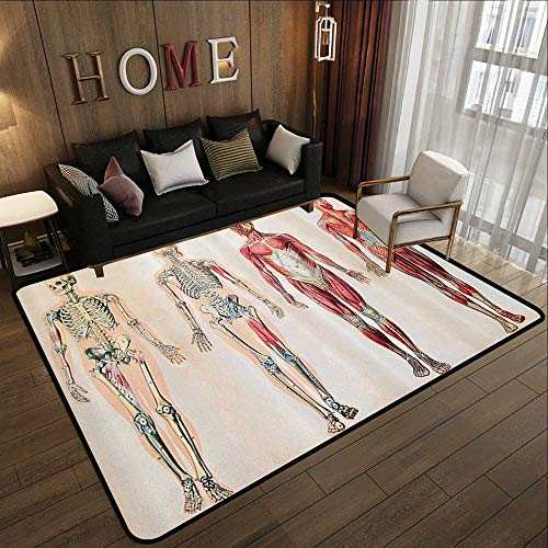Durable Rubber Floor Mat,Human Anatomy,Vintage Chart of Body Front Back Skeleton and Muscle System Bone Mass Graphic,Ruby Cream 78.7