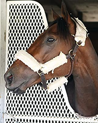 Nyquist / 2016 Kentucky Derby Winner 8 x 10 / 8x10 GLOSSY Photo Picture