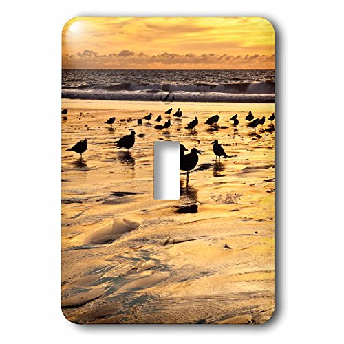 3dRose Danita Delimont - Encinitas - California, Encinitas. Sea gulls on Moonlight Beach at sunset - Light Switch Covers - single toggle switch - Encinitas Outlet
