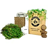 Mr. Sprout Organic Herbal Remedies Kit: Seed Starter Kit - Easily Grow 5 Medicinal Herbs with Indoor Herb Garden Kit (Chamomile, Echinacea, Catnip, Sage & Thyme) – Natural Homeopathic Remedies
