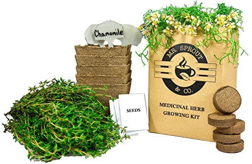 Mr. Sprout Herbal Remedies Kit: Seed Starter Kit - Easily Grow 5 Medicinal Herbs with Indoor Herb Garden Kit (Chamomile, Echinacea, Catnip, Sage & Thyme)  Natural Homeopathic Remedies