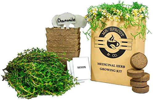 Mr. Sprout Organic Herbal Remedies Kit: Seed Starter Kit   Easily Grow 5  Medicinal