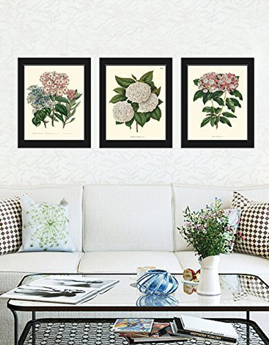 Botanical Set of 3 Prints Antique Beautiful White Pink Blue Hydrangea Plant Flowers
