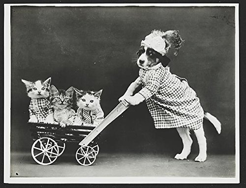 Pictures Of Kittens In Costumes (Dog in costume, pushing kittens in wagon cart, Early 1900's Photo Print: 11''x14'' Photo Print)