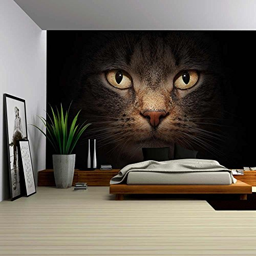 wall26 - Cat Face with Beautiful Eyes Close Up Portrait - Removable Wall Mural | Self-adhesive Large Wallpaper - 100x144 inches