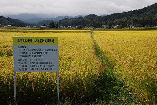 【精米】特別栽培米コシヒカリ 山形おきたま川西町『玉庭米ファイトクラブ』 5kg【受注精米】
