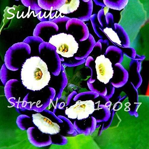 120 Semillas/Bolsa Escasa Rara Semillas de flores de petunia fantasma Hermosas semillas de flores Jardín Bonsai Planta Decoración Ornamental-Planta: Amazon.es: Jardín