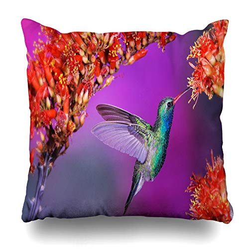 InnoDIY Throw Pillow Covers Animals Hummingbird Birds Flight Speed Wings Flap Flowers Pillowslip Square Size 18 x 18 Inches Cushion Cases -