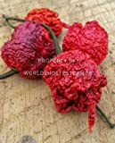 6x ORGANIC Dried Trinidad Scorpion Butch T Pepper PodsSpring Irrigated