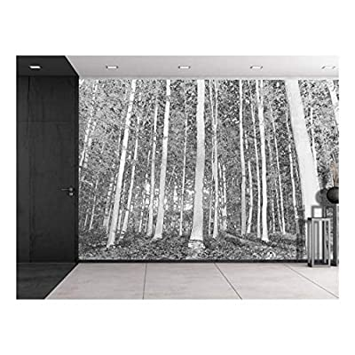 Charming Composition, With a Professional Touch, Black Outlined Trees on a Forest Wall Mural