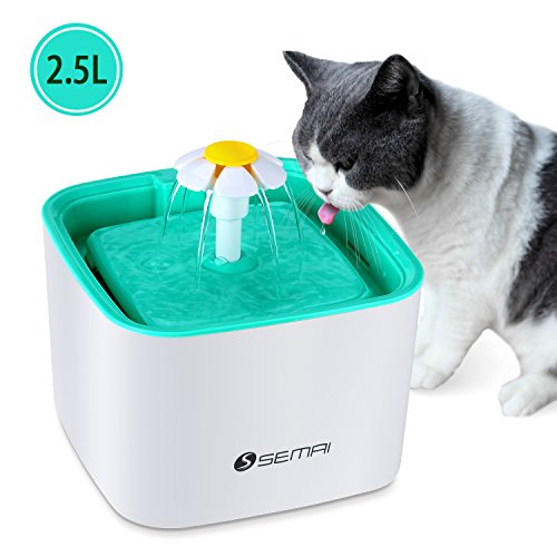 with Cat Fountains design