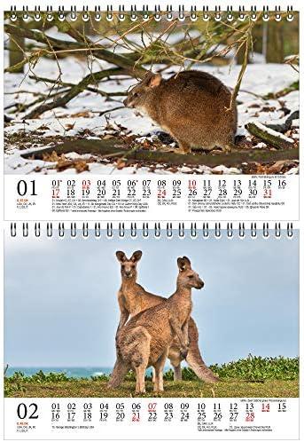 Känguruzauber DIN A5 Tischkalender für 2021 Känguru - Geschenkset Inhalt: 1x Kalender, 1x Weihnachts- und 1x Grußkarte (insgesamt 3 Teile)