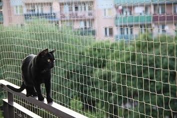 Balkonnetz Fur Katzen Und Vogel 5 X 5 M 50 Fastnet 1 Tube
