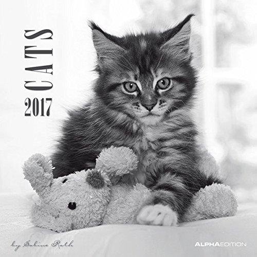 Cats 2017 - Katzen - Broschürenkalender (30 x 60 geöffnet) - schwarz/weiß - by Sabine Rath - Tierkalender - Wandplaner