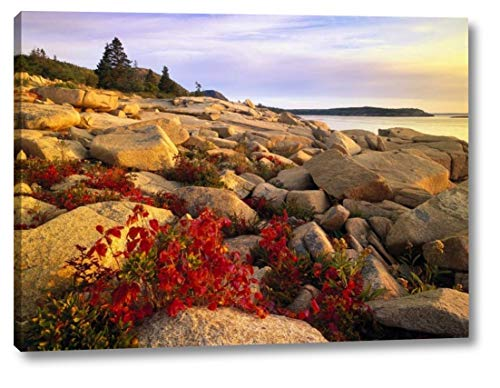 (Atlantic Coast Near Thunder Hole, Acadia National Park, Maine - 2 by Tim Fitzharris - 17