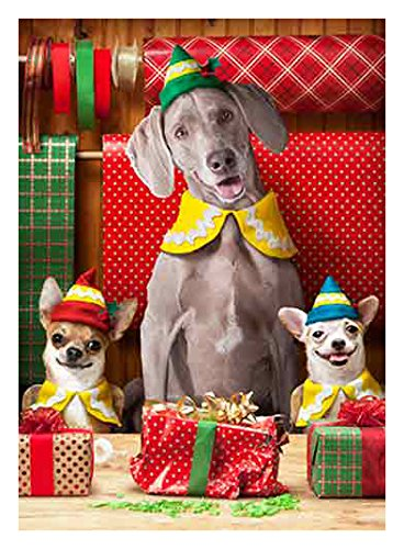 Avanti 10-Count Christmas Cards, Elf Dogs Chihuahua Christmas Cards