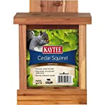 Squirrel Feeders Product
