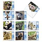 """Mommy Dearest: 10 Assorted Set of Blank New 'Square-Top' All Occasions Cards Animals in Nature Creative and Loving, with Envelopes Size: (1 Each of 10 Designs, Size: 4"""" x 5"""") AMQ4961OCB-B1x10"""