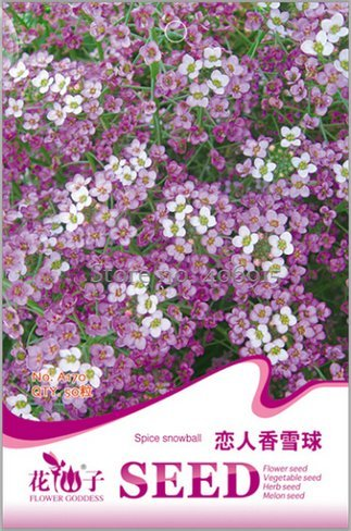 Amazon New White Spice Snowball Flower Seeds Original Package