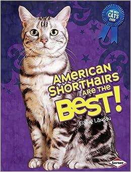 American Shorthair Cat Characteristics